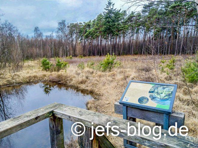 Teich in der neuen Heide
